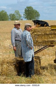 french-farmers-with-dog-working-on-old-straw-baler-machine-at-agricultural-b302j8